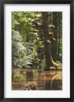 Framed Rainforest and Swamp, Queen Charlotte Islands, Canada