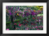 Framed Rose Garden at Butchard Gardens In Full Bloom, Victoria, British Columbia, Canada