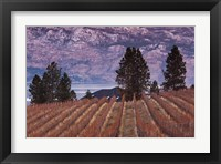 Framed Vineyard and lake, West Kelowna, Okanagan Valley, British Columbia, Canada
