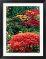 Framed View of Butchart Garden, Victoria, British Columbia, Canada