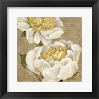 Up Close Cream Peony Framed Print
