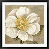 Framed Up Close Cream Rose