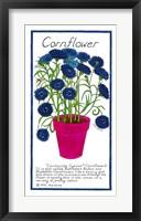 Framed Cornflower