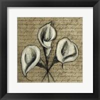 Cala Lily Script 2 Framed Print
