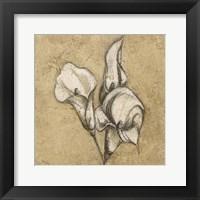 Cala Lily Soft 1 Framed Print