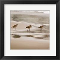 Framed Shore Birds II