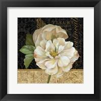 Antique Still Life Rose Framed Print
