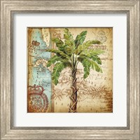 Framed Antique Nautical Palms I