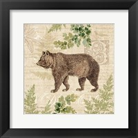Framed Woodland Trail II (Bear)