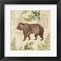 Woodland Trail II (Bear) Framed Print