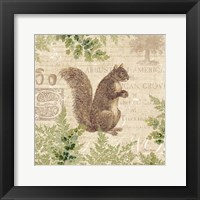 Framed Woodland Trail III (Squirrel)