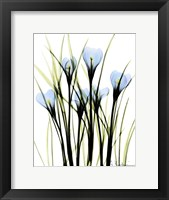 Framed Crocus