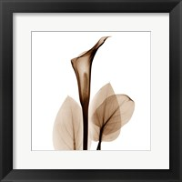 Framed Calla Lily in Sienna