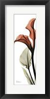 Framed Soft Calla Lily
