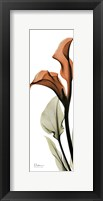 Framed Terracotta Calla Lily