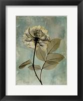 Framed Rose 5