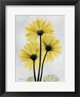 Framed Golden Gerbera 1