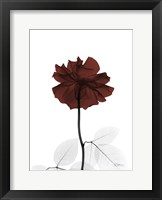 Framed Ox Blood Rose 2