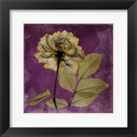 Framed Rose 7
