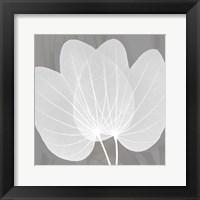 Framed Grey Beauty 3