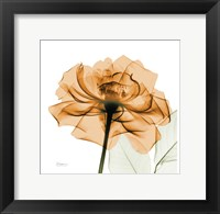 Framed Copper Rose White Leaves