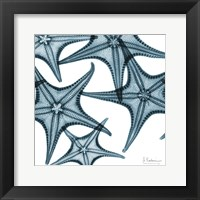 Framed Starfishes