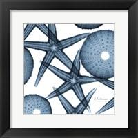 Framed Starfish Trip 2
