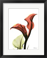 Framed Calla Lily Red