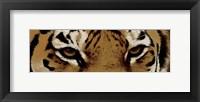 Framed Tiger Eyes