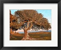 Framed One Tree