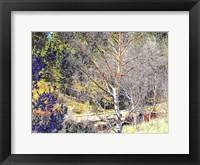 Framed Woods II