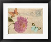 Framed Vintage Butterfly Postcard IV