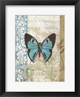 Framed Butterfly Blue