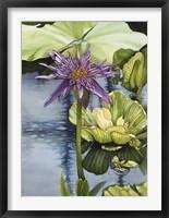 Framed Lily