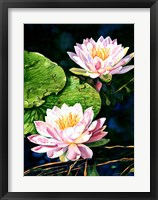 Framed Waterlily Reflections