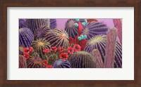 Framed Barrel Cactus 1