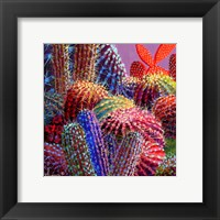 Framed Barrel Cactus 4