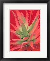 Framed Red Agave