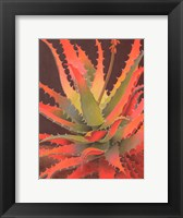 Framed Sunset Agave