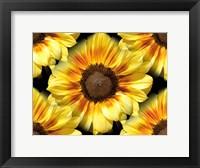 Framed Sunflower 26