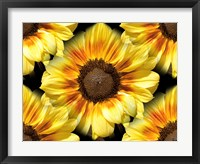 Framed Sunflower 26