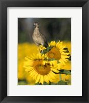 Framed Sunflower 54