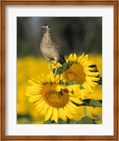 Framed Sunflower 54