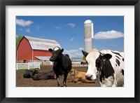Framed Cows, red barn, silo, farm, Wisconsin