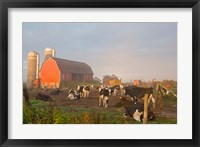 Framed Holstein dairy cows outside a barn, Boyd, Wisconsin