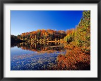 Framed Pond in the Chaquamegon National Forest, Cable, Wisconsin