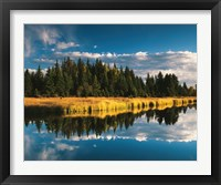 Framed Trees reflecting in Snake River, Grand Teton National Park, Wyoming