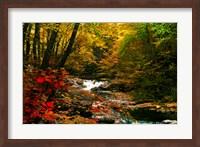 Framed Mountain Stream