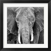 Framed Elephant