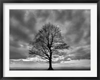 Framed Great Tree